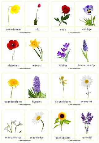 fotokaartenbloemengroot01