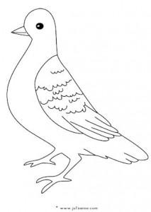 duifgroot01